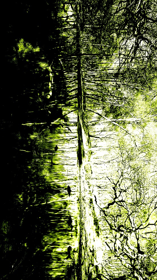 wendle tree reflection small